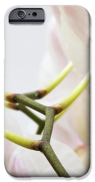 Designs In Nature iPhone Cases - Walk The Orchid iPhone Case by Wim Lanclus