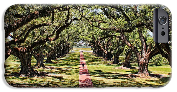 Pathway iPhone Cases - Walking Down Oak Alley iPhone Case by Judy Vincent