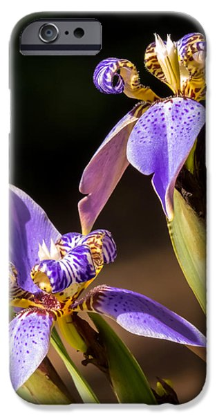 Best Sellers -  - Plant iPhone Cases - Walking Iris iPhone Case by Zina Stromberg