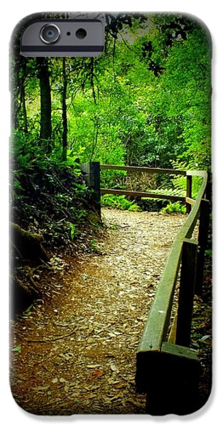 Walking Beat iPhone Cases - Walking Track Bunya Mountains National Park Qld Australia iPhone Case by Sandra Sengstock-Miller