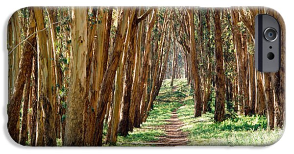 The Way Forward iPhone Cases - Walkway Passing Through A Forest, The iPhone Case by Panoramic Images
