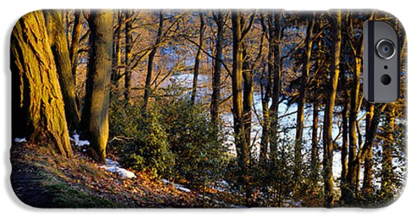 Walk Paths iPhone Cases - Walkway Passing Through The Forest iPhone Case by Panoramic Images