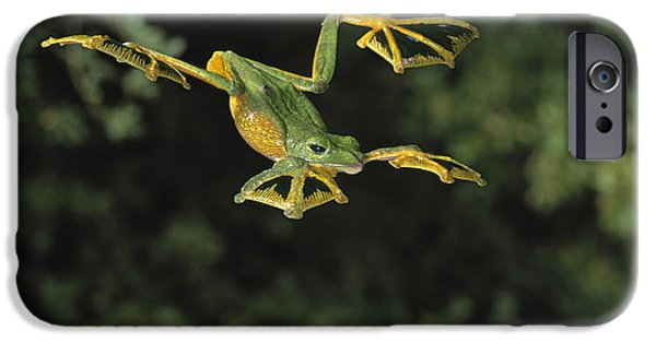 Flying Frog iPhone Cases - Wallaces Flying Frog iPhone Case by Stephen Dalton