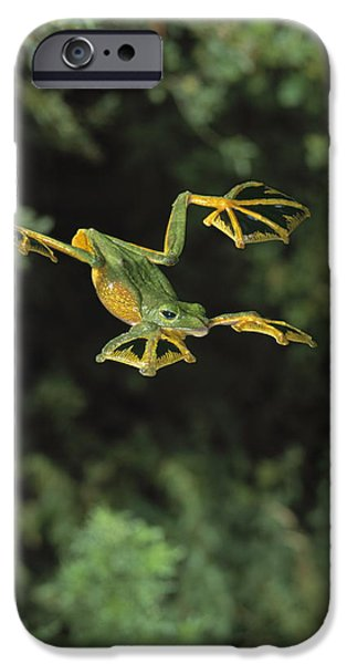 Wallaces Flying Frog iPhone Case by Stephen Dalton