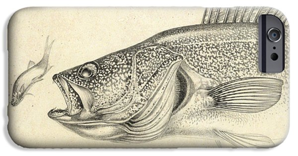 Walleye iPhone Cases - Walleye Pencil Study iPhone Case by Jon Q Wright
