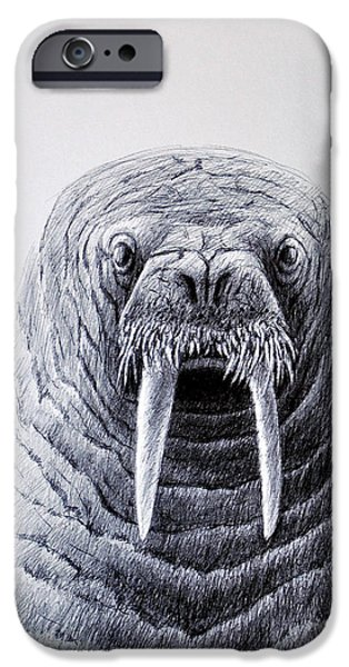 North Sea Drawings iPhone Cases - Walrus Portrait iPhone Case by Rick Hansen