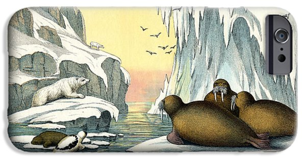 Arctic Drawings iPhone Cases - Walrus iPhone Case by Splendid Art Prints