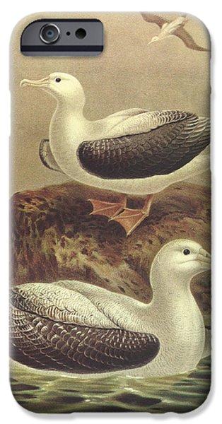 Albatross iPhone Cases - Wandering Albatross iPhone Case by J G Keulemans