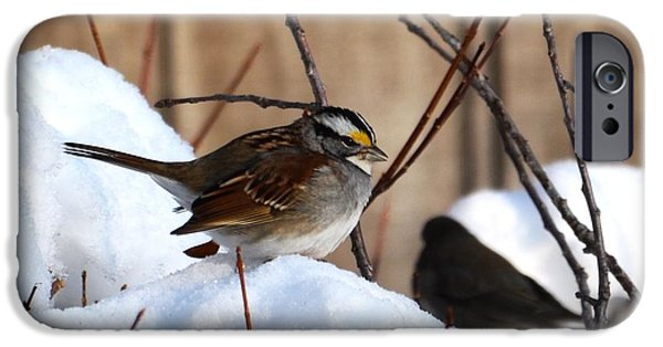 Snow iPhone Cases - White-throated Sparrow iPhone Case by Lisa Kilby