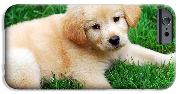 Fuzzy Golden Puppy iPhone Cases - Warm Fuzzy Puppy iPhone Case by Christina Rollo