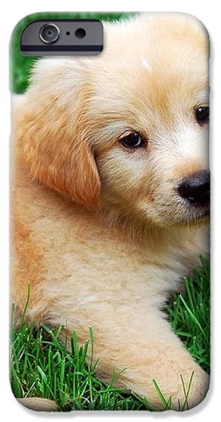 Warm Fuzzy Puppy iPhone Case by Christina Rollo