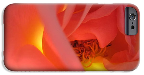 Flora Drawings iPhone Cases - Warm Glow Pink Rose 2 iPhone Case by Tara  Shalton
