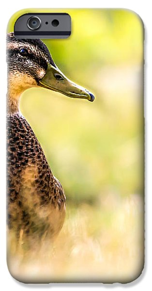 Warm Summer Morning And A Duck iPhone Case by Bob Orsillo