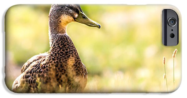 Young Photographs iPhone Cases - Warm Summer Morning And A Duck iPhone Case by Bob Orsillo