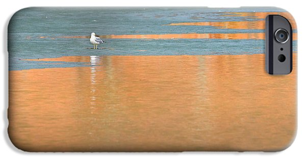 Seagull iPhone Cases - Warming Waters iPhone Case by Bill  Wakeley