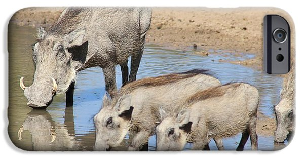 Power iPhone Cases - Warthog Family  iPhone Case by Hermanus A Alberts
