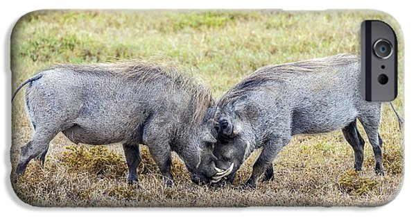Addo iPhone Cases - Warthogs Fighting iPhone Case by Peter Chadwick