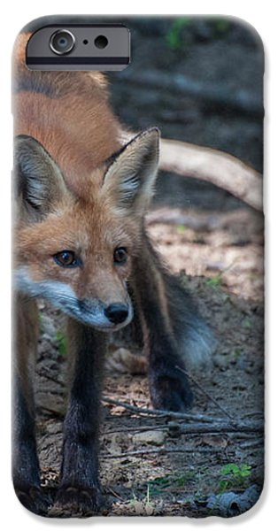 Wary Fox iPhone Case by Bianca Nadeau
