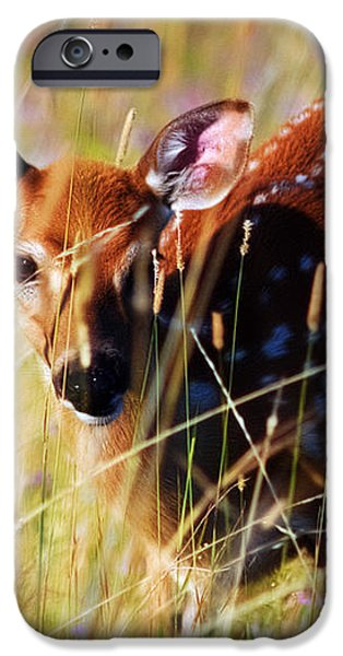 Wary iPhone Case by Heather Applegate
