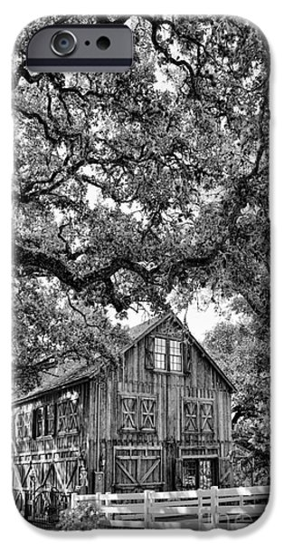 Old Barn Drawing iPhone Cases - Was He Raised In A Barn? iPhone Case by Delilah Downs
