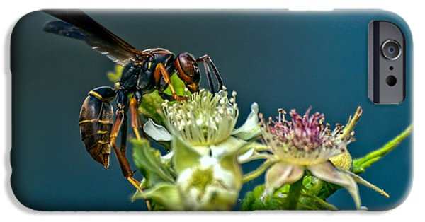Nectar iPhone Cases - Wasp iPhone Case by Bob Orsillo