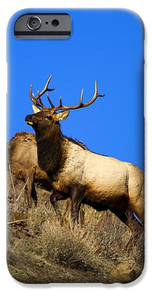 Watchful Bull iPhone Case by Mike  Dawson