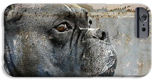 Boxer Dog iPhone Cases - Watchful iPhone Case by Judy Wood