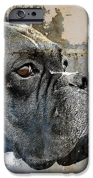 Watchful iPhone Case by Judy Wood