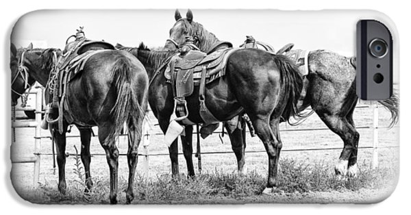 American Quarter Horse iPhone Cases - Watching and Waiting iPhone Case by Karen Slagle