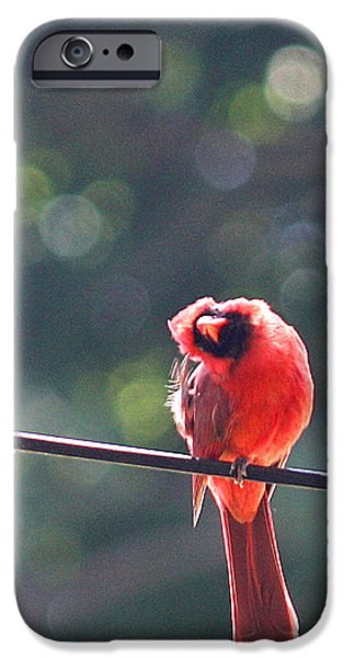 Outdoors iPhone Cases - Watching me cry iPhone Case by  The Art Of Marilyn Ridoutt-Greene