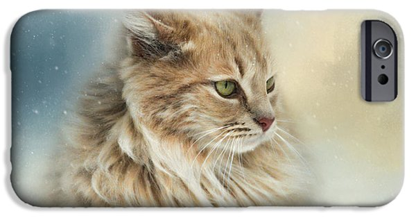 Orange Tabby iPhone Cases - Watching Snow Fall iPhone Case by Jai Johnson