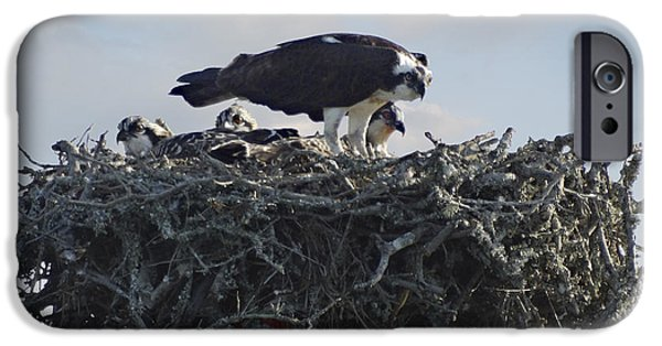 Marker iPhone Cases - Watching The Kids - Ospreys iPhone Case by Mike McGlothlen