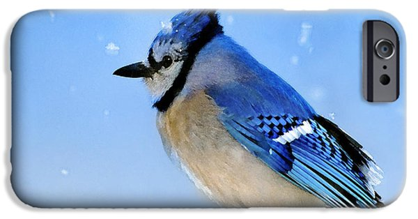 Bluejay iPhone Cases - Watching the Snow iPhone Case by Betty LaRue