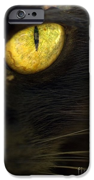 One iPhone Cases - Watching You iPhone Case by Anne Gilbert
