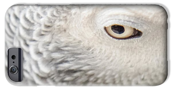 Nature Abstract iPhone Cases - Watching You Watching Me iPhone Case by Karen Wiles