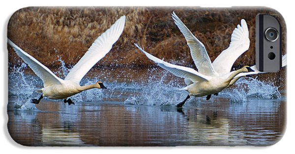 Swans... Photographs iPhone Cases - Water Dance iPhone Case by Mike  Dawson