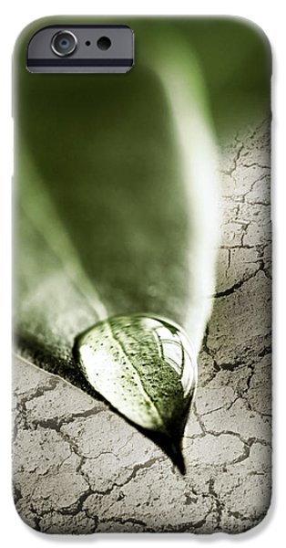 Concept Photographs iPhone Cases - Water drop on green leaf iPhone Case by Elena Elisseeva