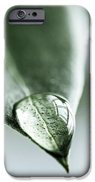 Water drop on leaf iPhone Case by Elena Elisseeva