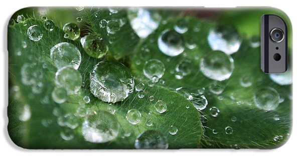 Rollo Digital Art iPhone Cases - Water Drops On Green Clover iPhone Case by Christina Rollo
