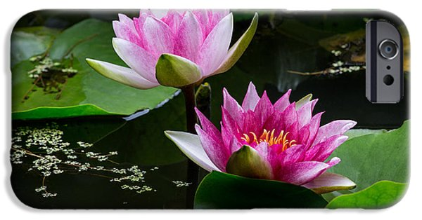 Water Lilly iPhone Cases - Water Garden Delight iPhone Case by Dale Kincaid