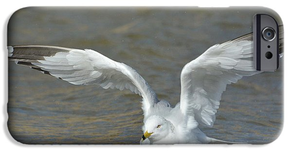 Seagull iPhone Cases - Water Landing iPhone Case by Fraida Gutovich