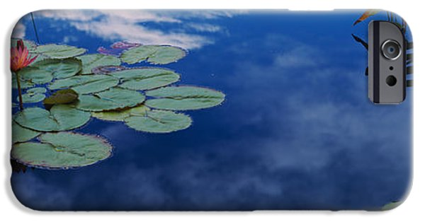 Reflection In Water iPhone Cases - Water Lilies In A Pond, Denver Botanic iPhone Case by Panoramic Images