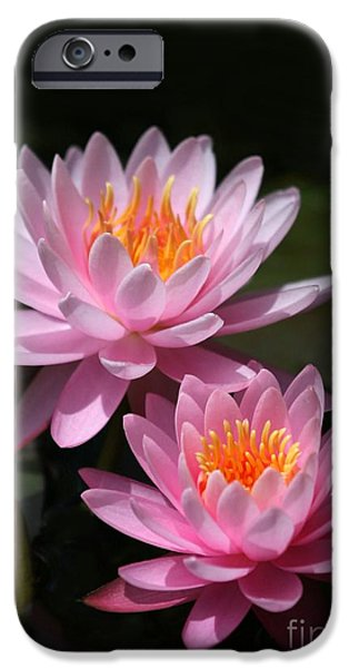 Water Lilies Love the Sun iPhone Case by Sabrina L Ryan