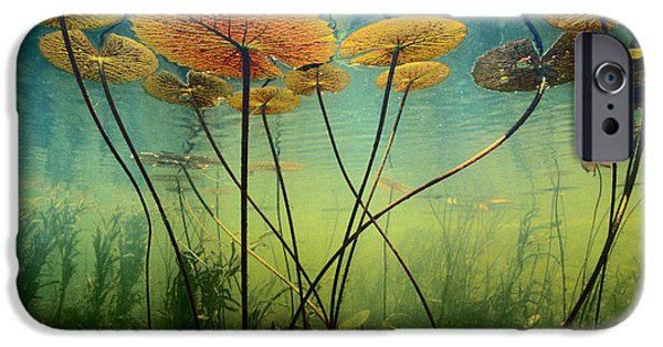Flora iPhone Cases - Water Lilies iPhone Case by Frans Lanting MINT Images