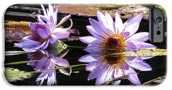 Best Sellers -  - Plant iPhone Cases - Water lilies on the sun iPhone Case by Zina Stromberg