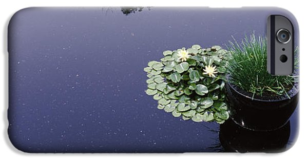 Botanical iPhone Cases - Water Lilies With A Potted Plant iPhone Case by Panoramic Images