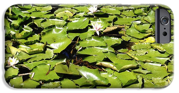 Aquatic Plants iPhone Cases - Water lillies iPhone Case by Les Cunliffe