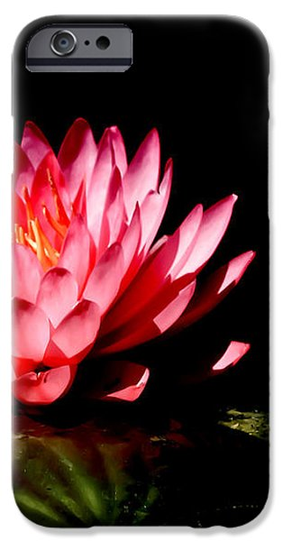 Water Lily 5 iPhone Case by Julie Palencia