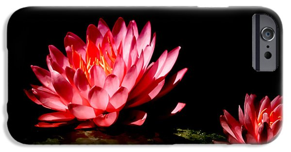 Flora iPhone Cases - Water Lily 5 iPhone Case by Julie Palencia