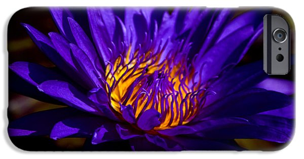 Nature Center Pond iPhone Cases - Water Lily 7 iPhone Case by Julie Palencia